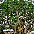 001 Bonsai Summer Show Buffalo Botanical Gardens Series by Michael Frank Jr