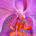 001 Orchid Summer Show Buffalo Botanical Gardens Series by Michael Frank Jr