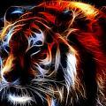 0012 Siberian Tiger by Michael Frank Jr