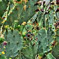 002 For The Cactus Lover In You Buffalo Botanical Gardens Series by Michael Frank Jr