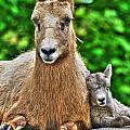 002 Nap Time At The Buffalo Zoo by Michael Frank Jr