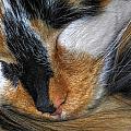 0053 Sleeping Cleo by Michael Frank Jr