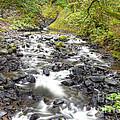 0106 Columbia River Gorge Near Bridal Veil Falls by Steve Sturgill