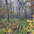 0133 Misty Meadow 2 by Steve Sturgill