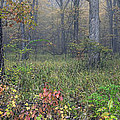 0134 Misty Meadow by Steve Sturgill