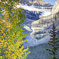 0141 Fall Colors On Icefield Parkway by Steve Sturgill