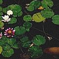 0148-lily -   Pastel Chalk 2 Sl by David Lange