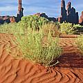 0348 Totem Pole by Steve Sturgill