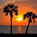 0602 Pair Of Palms At Sunrise by Jeff at JSJ Photography