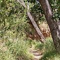 08.03.14 Palo Duro Canyon Rojo Grande Trail 8e by Ashley M Conger