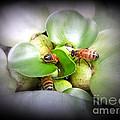 1 . 2 . 3 . Honeybees by Renee Trenholm