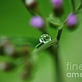 Drop by Michelle Meenawong