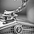 1931 Cadillac 355 Hood Ornament by Jill Reger