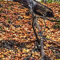 Woods Scene by Patrick  Warneka