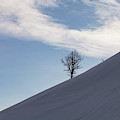 A Backcountry Skier Skins Up A Ridge by Robin Carleton