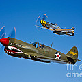 A P-40e Warhawk And A P-51d Mustang by Scott Germain