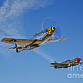 A P-51d Mustang Kimberly Kaye by Scott Germain