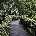 A Raised Walking Path Inside The National Orchid Garden In Singapore by Ashish Agarwal