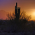 A Sonoran Morning  by Saija  Lehtonen