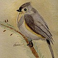 A Tufted Titmouse by Angela Davies