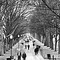A Walk Along The National Mall Alongside The Reflecting Pool by William Kuta
