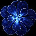 Abstract Flower by Lijie Zhou