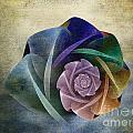 Abstract Rose by Klara Acel