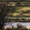 Across The River by Kristal Kraft
