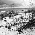 After The Storm Bw by Norman Johnson