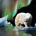 Alaska Aurora Polar Bear Search by Dianne Roberson