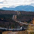 Alaska Oil Pipeline by Mark Newman
