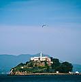 Alcatraz by Zina Zinchik