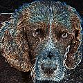 Old Blue Eyes by Dave Byrne