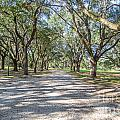 Lowcountry Allee Of Oaks by Dale Powell