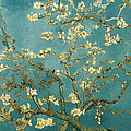 Almond Blossoms by Mountain Dreams