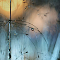 Almost Dark by Heidi Westum