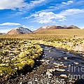 Altiplano In Bolivia by Mariusz Prusaczyk