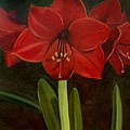 Amaryllis by Nancy Griswold