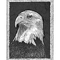 American Bald Eagle by Jack Pumphrey