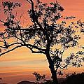 Amicalola Falls Sunset by Robert Richardson