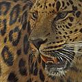 Amur Leopard 1 by Ernie Echols