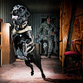 An Air Force Security Forces K-9 by Stacy Pearsall