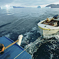 An Inuit Hunter Ferries His Sled Dogs by David McLain
