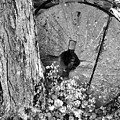An Old Mill Stone Ely's Mill Roaring Fork Bw by Cynthia Woods