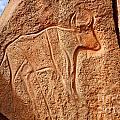Ancient Engraving Of A Buffalo At The Wadi Matkhandouch In Libya by Robert Preston
