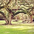 Ancient Oaks by Scott Pellegrin