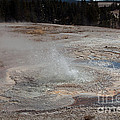 Anemone Geyser In Upper Geyser Basin by Fred Stearns