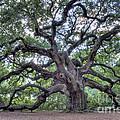 Angel Oak by Dustin K Ryan
