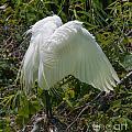 Angel Wings by Dale Powell