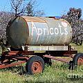 Apricots by Henrik Lehnerer